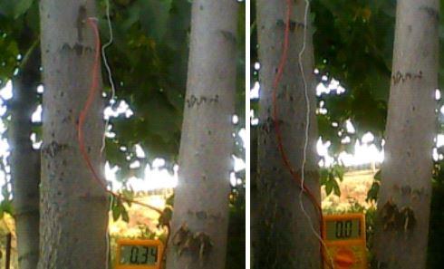 Akasya Ağacından Biyoenerji Elde Etme