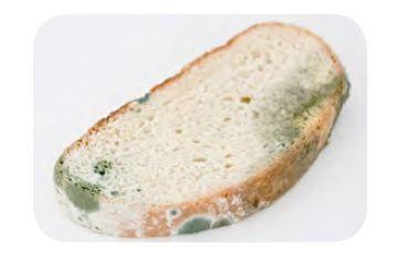 Ekmek küfü