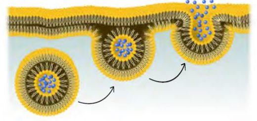 Hücre zarında ekzositoz