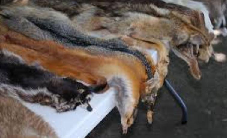 Hayvanların derileri, tüyleri, yünleri de dokuma ve tekstil alanında kullanılmaktadır.