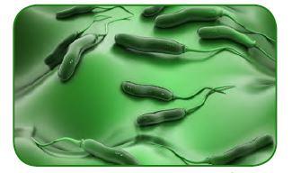 Kamçı bulunduran bakteriler