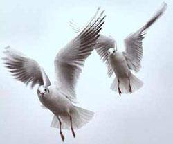 Kuşların Özellikleri