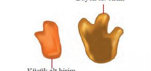 Ribozomun alt birimleri