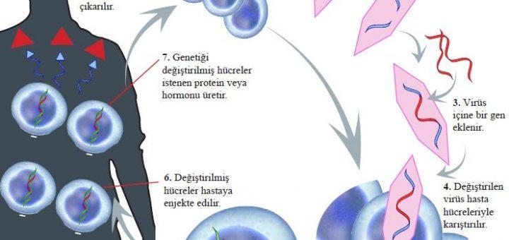 Kanserle mücadelede virüslerin vektör olarak kullanılması
