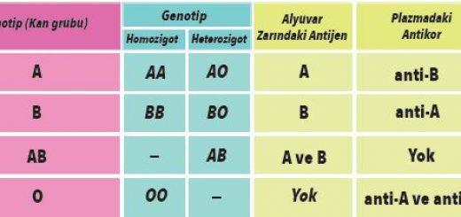 ABO Kan Grubu Sisteminin Üç Farklı Alelle Kalıtımı
