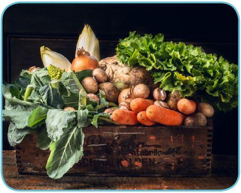 A vitamini içeren bazı besinler