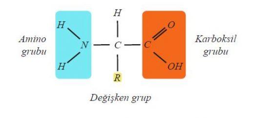Bir amino asitin genel formülü