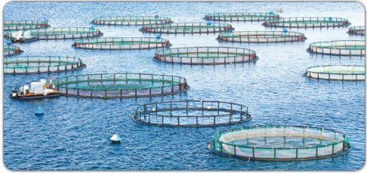 Çevre dostu balık çiftlikleri