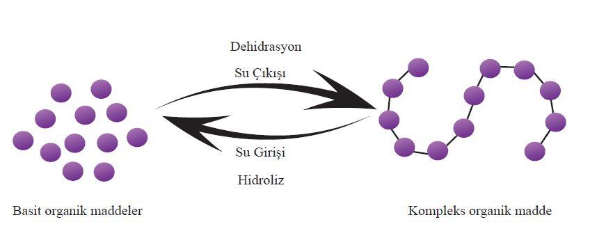 Dehidrasyon ve hidroliz reaksiyonu