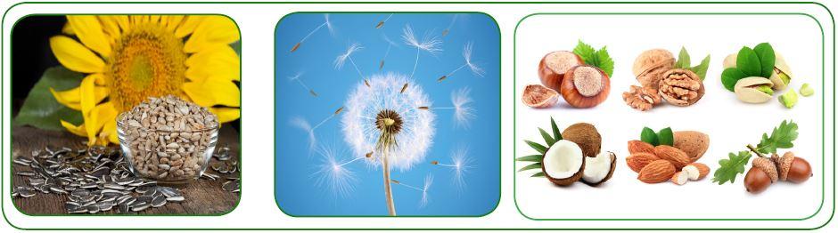 Farklı bitkilere ait tohumlar
