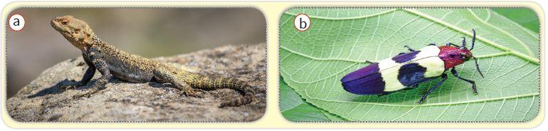 Gündüz aktif olan canlılar: kertenkele (a), böcek (b)