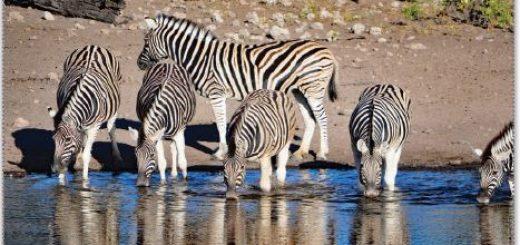 Hayvanlarda su ihtiyacının giderilmesi