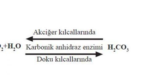 Karbonik anhidraz enziminin çift yönlü etki mekanizması