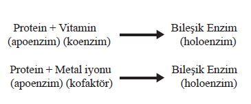 Bileşik enzimlerde koenzim ve kofaktör kavramı