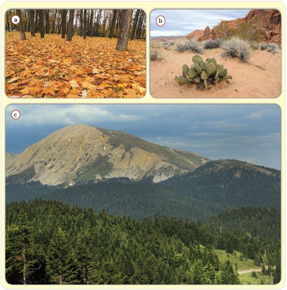 Komünite örnekleri: kuru yaprak (a), çöl (b), Ilgaz Dağları (c)