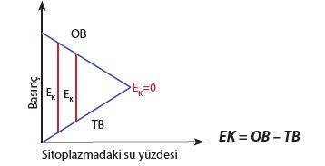 OB, TB VE EK ilişkisi
