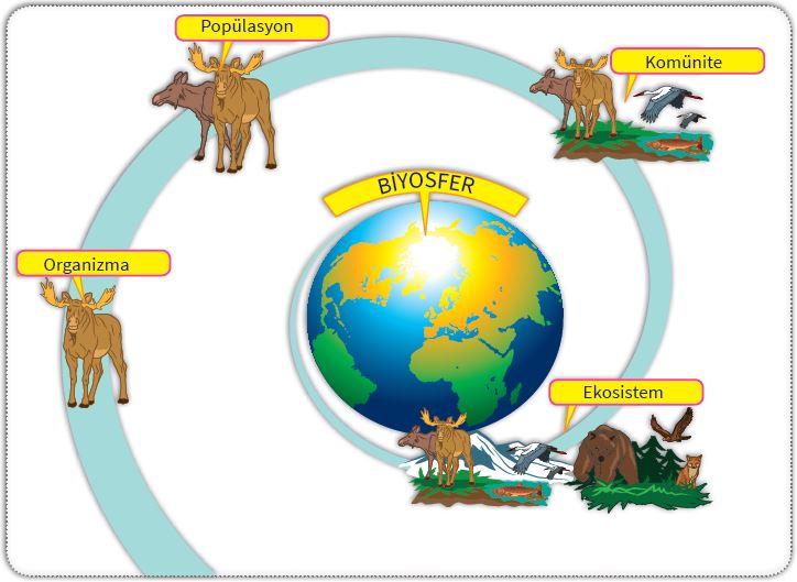 Organizma, popülasyon, komünite, ekosistem, biyosfer