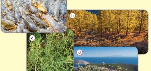 Popülasyon örnekleri : aynalı sazan (a), sarı çam (b), tarhun otu (c), kekik bitkisi(d)