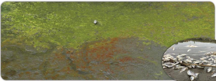 Su kirliliği ve balık ölümleri