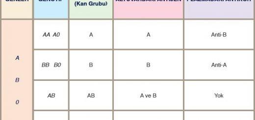 AB0 Kan Grupları