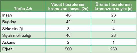 Bazı canlı türlerinin vücut ve üreme hücrelerinin kromozom sayıları