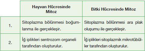 Hayvan ve bitki hücrelerinde mitozun farkları