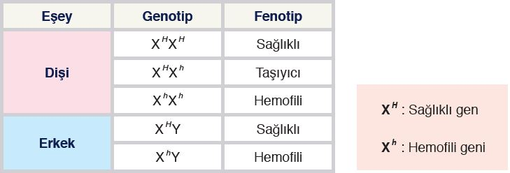 Hemofili Genotip ve Fenotipleri