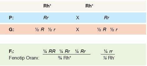 Heterozigot Rh kan gruplarının çaprazlanması