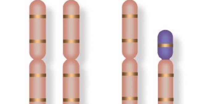 nsanda cinsiyeti belirleyen kromozomlar