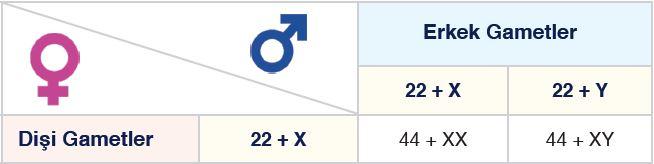 İnsanda Kromozom Formülü