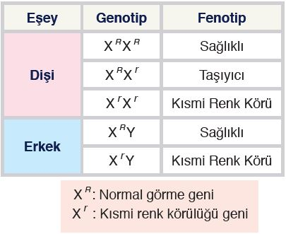 Kısmi renk körlüğü genotip ve fenotipleri