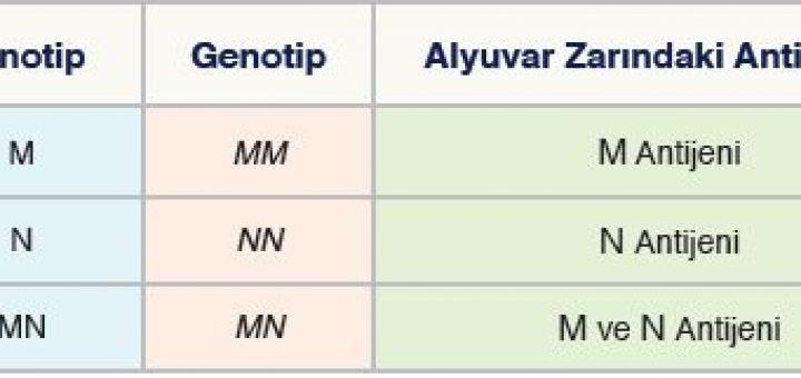 MN Kan Grubunda Fenotip ve Genotipler