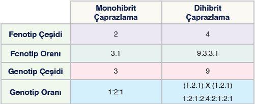 Monohibrit ve Dihibrit Çaprazlamalarda Fenotip, Genotip Çeşitleri ve Oranları