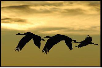 Canlı türlerinin göç etmesinin en büyük nedeni çevresel faktörler