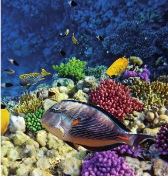 Denizler, canlı çeşitliliği bakımından zengin ortamlardır.